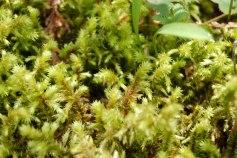 petkid-walk-in-the-woods_DSC_0924