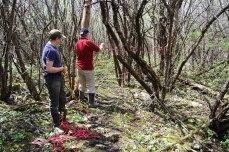 petkid-walk-in-the-woods_DSC_0954
